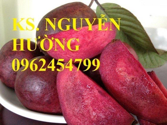 Cung cấp giống cây ổi tím, cây ổi đỏ và các loại giống cây ăn quả khác, giao cây toàn quốc4