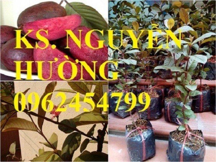 Cung cấp giống cây ổi tím, cây ổi đỏ và các loại giống cây ăn quả khác, giao cây toàn quốc0