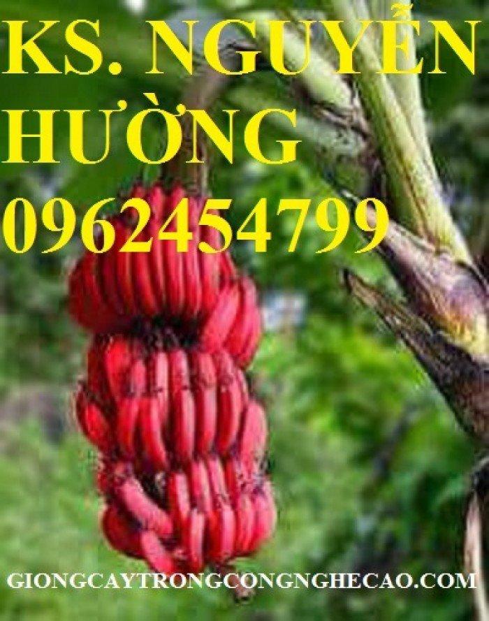 Cung cấp cây giống chuối đỏ đăcca, cây chuối đỏ, giao cây toàn quốc6