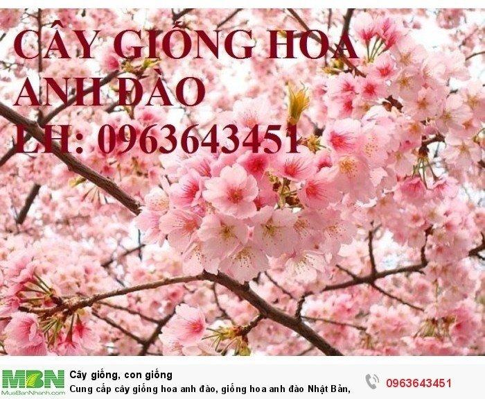 Cung cấp cây giống hoa anh đào, giống hoa anh đào Nhật Bản, giống hoa đào Nhật, hoa đào Nhật Sakura, uy tín, chất lượng, giao hàng toàn quốc0