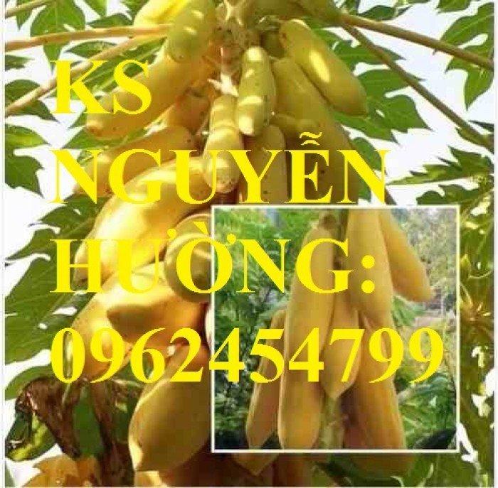 Cung cấp cây giống đu đủ vàng lùn, hướng dẫn kỹ thuật trồng cây đu đủ vàng, cung cấp cây toàn quốc3