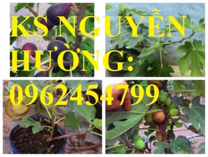 Cung cấp cây sung mỹ - cây ăn quả độc đáo cho nhiều dinh dưỡng, giao cây toàn quốc4
