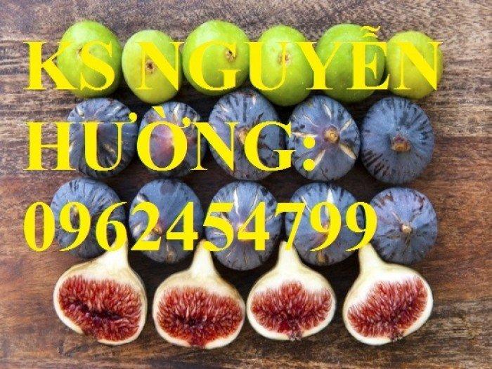 Cung cấp cây sung mỹ - cây ăn quả độc đáo cho nhiều dinh dưỡng, giao cây toàn quốc1