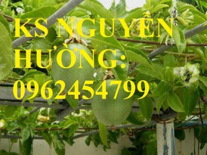 Cung cấp cây giống chanh leo ngọt colombia, chanh leo ngot, cung cấp cây giống toàn quốc3