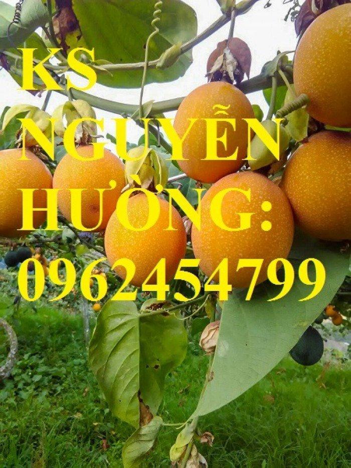 Cung cấp cây giống chanh leo ngọt colombia, chanh leo ngot, cung cấp cây giống toàn quốc1