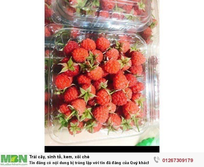 Raspberry - Phúc Bồn Tử - Mâm Xôi TP Hồ Chí Minh1