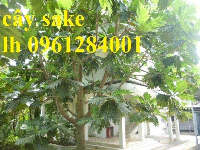 cây sake5