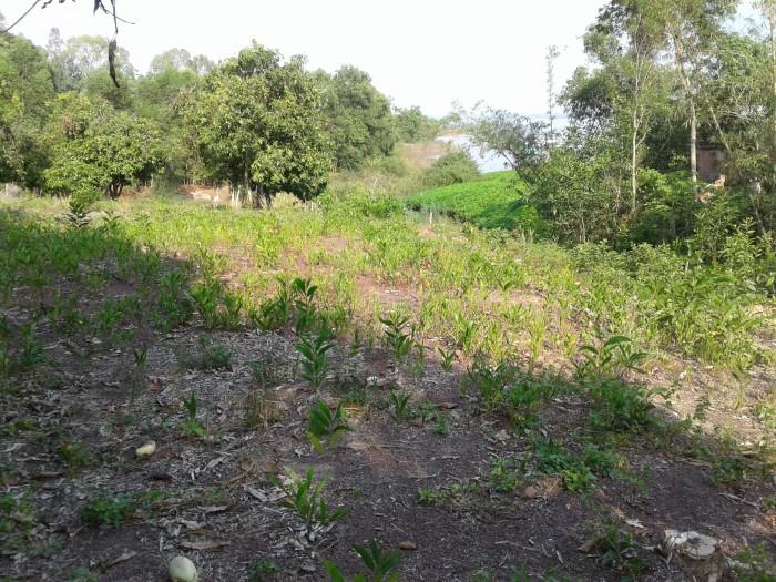 Cần bán 01 hecta ( 10.150m2) đất khu dân cư Mã Đà ( Ven hồ Trị An - Đồng Nai ) . Hạ tầng đầy đủ