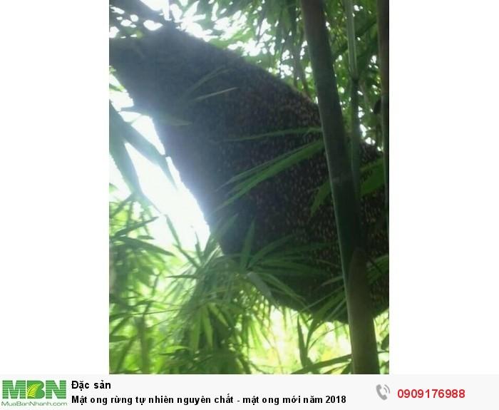 Mật ong rừng nguyên chất - mật ong tự nhiên4