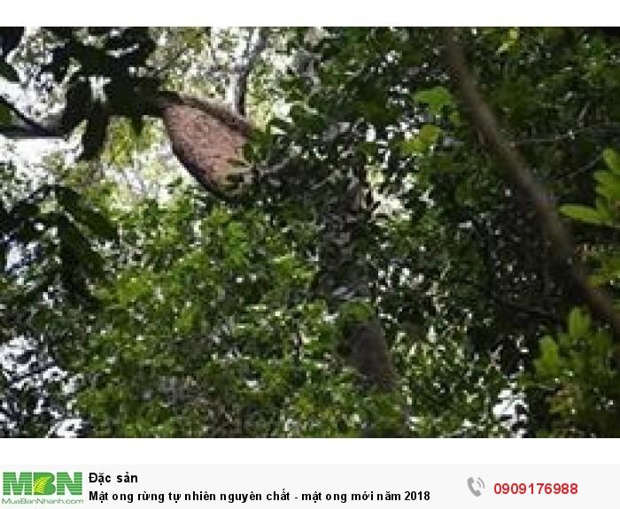 Mật ong rừng nguyên chất - mật ong tự nhiên5