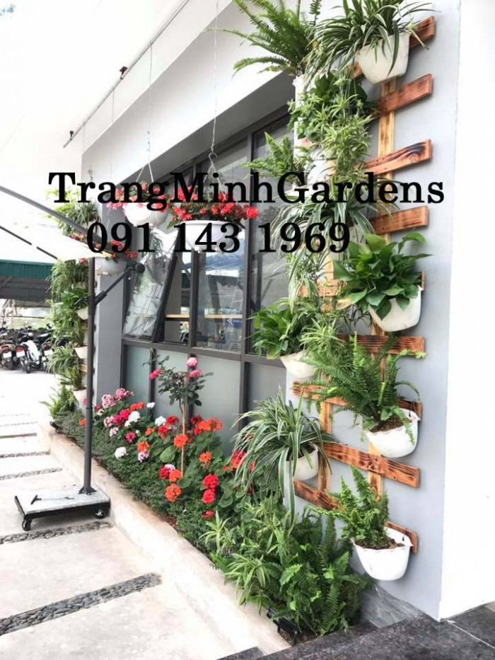 Dịch vụ tư vấn, cung cấp, chăm sóc hoa cây cảnh tại nhà (hoa hồng, hoa thảm, cây xanh...)2