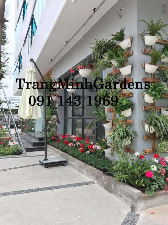 Dịch vụ tư vấn, cung cấp, chăm sóc hoa cây cảnh tại nhà (hoa hồng, hoa thảm, cây xanh...)3