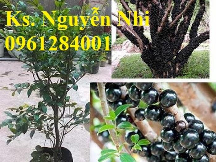 hình ảnh cây nho thân gỗ10