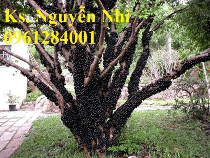 quả nho thân gỗ mọc chi chít trên thân cây8