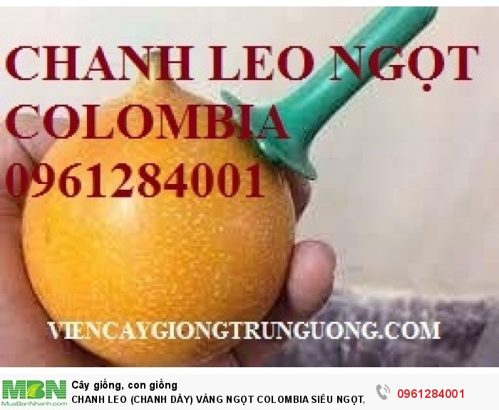 quả chanh leo ngọt colombia3
