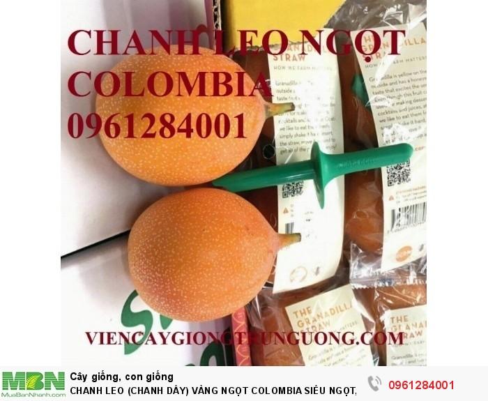 Chanh Leo (Chanh Dây) Vàng Ngọt Colombia Siêu Ngọt, Siêu Lơi Nhuận.4