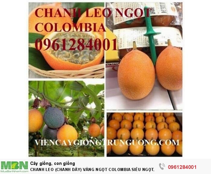 Chanh Leo (Chanh Dây) Vàng Ngọt Colombia Siêu Ngọt, Siêu Lơi Nhuận.5