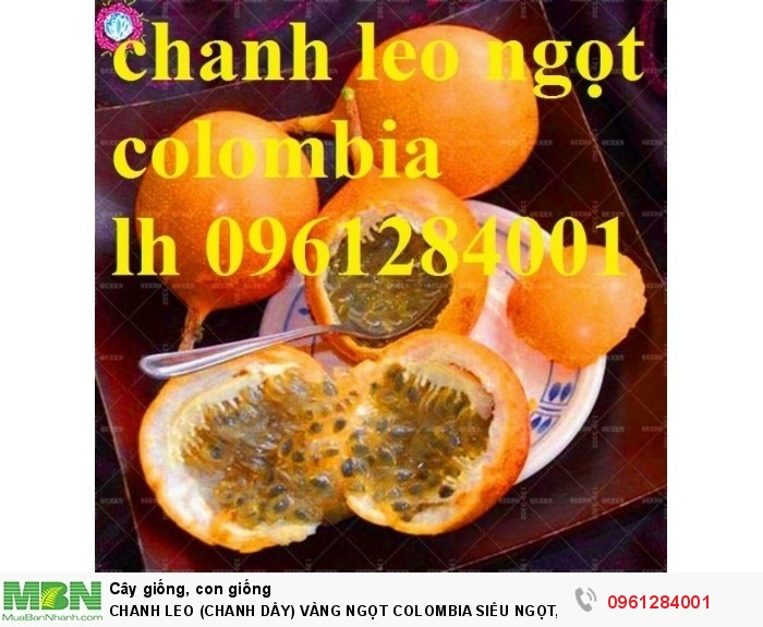 ăn quả chanh leo ngọt colombia12