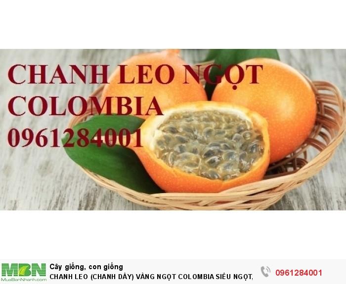 Chanh Leo (Chanh Dây) Vàng Ngọt Colombia Siêu Ngọt, Siêu Lơi Nhuận.16