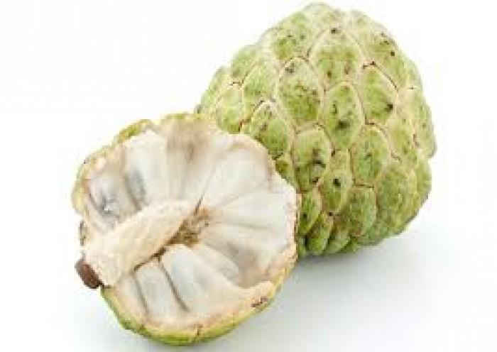 cung cấp giống cây ăn quả, cây ăn quả cây na đài loan, na bở đài loan, na nhập khẩu đài loan7
