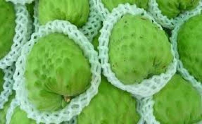 cung cấp giống cây ăn quả, cây ăn quả cây na đài loan, na bở đài loan, na nhập khẩu đài loan5