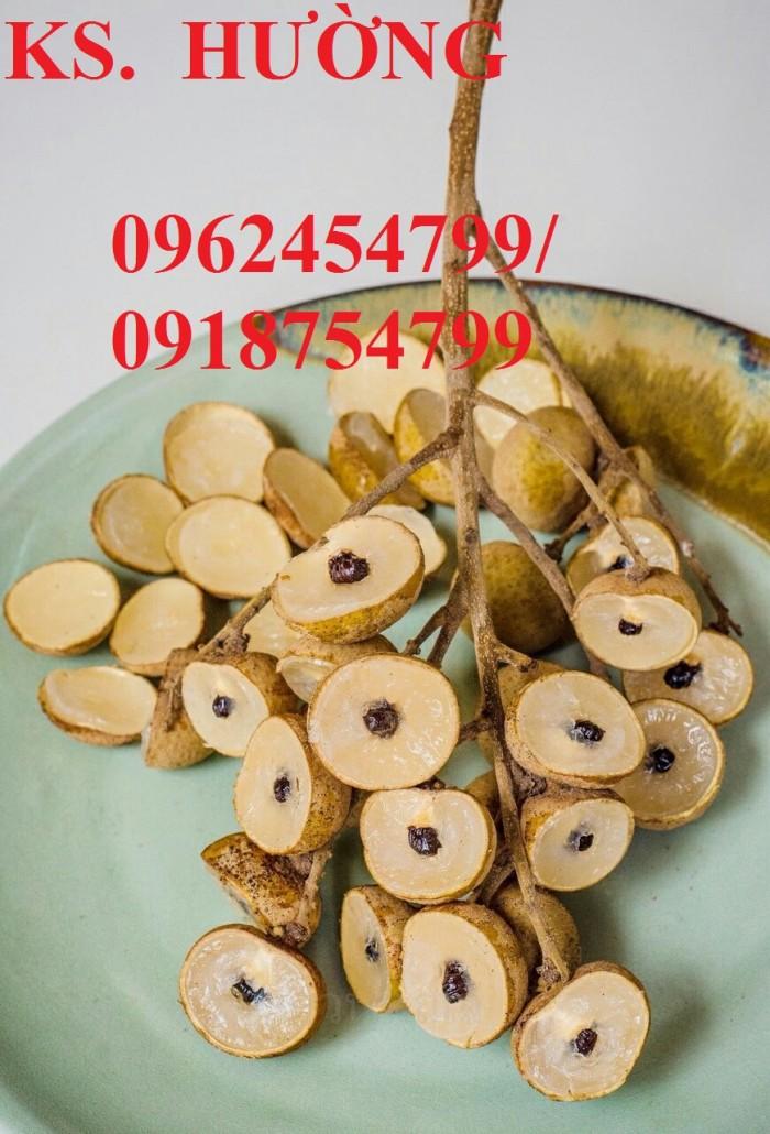 Bán giống cây nhãn không hạt chuẩn giống nhập khẩu, giao cây toàn quốc,12