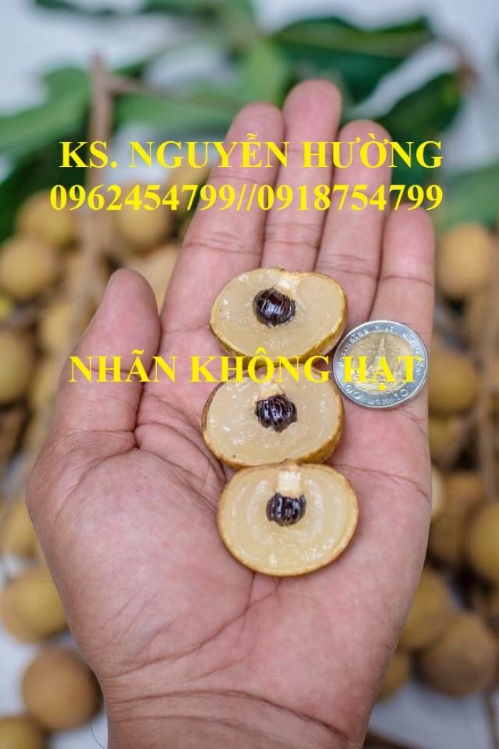 Bán giống cây nhãn không hạt chuẩn giống nhập khẩu, giao cây toàn quốc,10