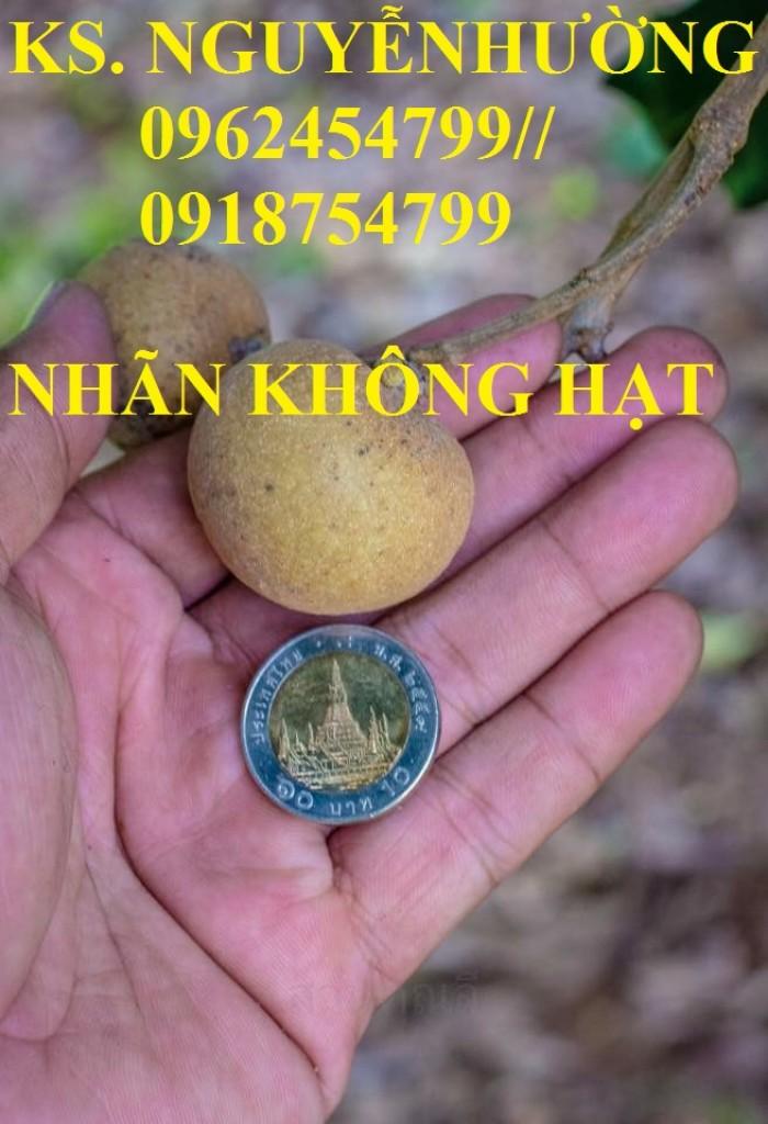 Bán giống cây nhãn không hạt chuẩn giống nhập khẩu, giao cây toàn quốc,3