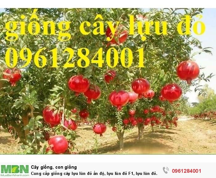 trồng cây lựu lùn đỏ cao sản8