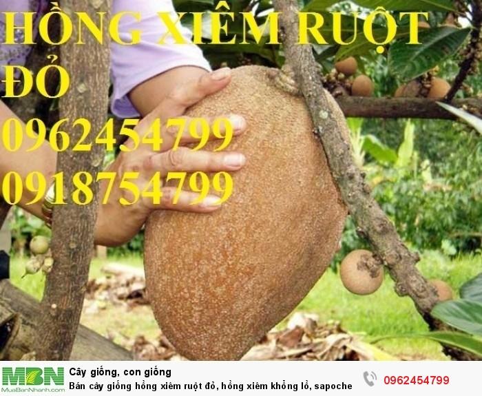 Bán cây giống hồng xiêm ruột đỏ, hồng xiêm khổng lồ, sapoche ruột đỏ, chuẩn giống nhập khẩu2