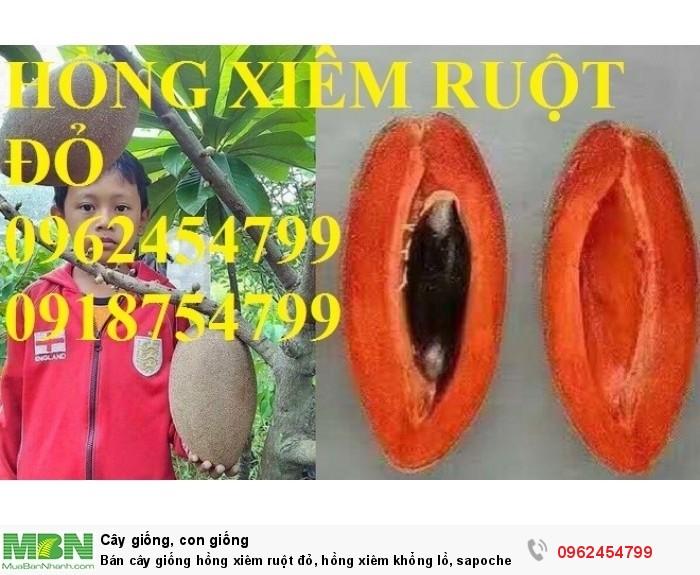 Bán cây giống hồng xiêm ruột đỏ, hồng xiêm khổng lồ, sapoche ruột đỏ, chuẩn giống nhập khẩu10