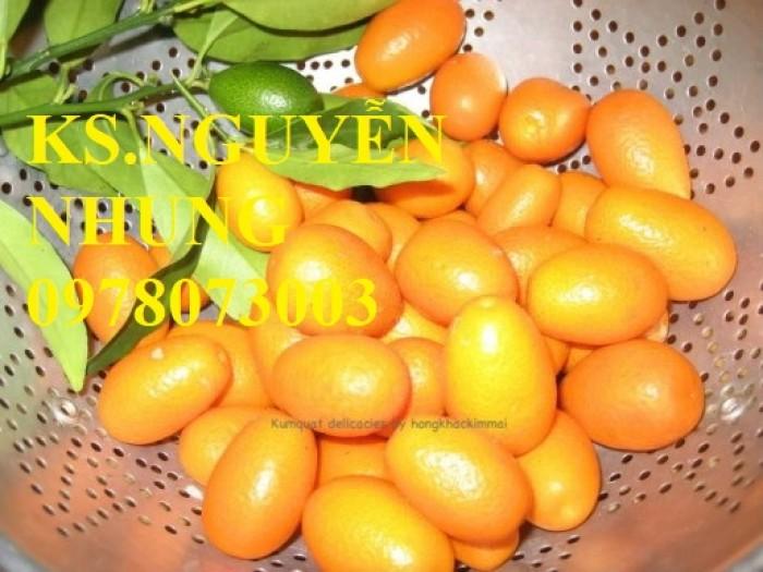 Bán cây quất ngọt, giống cây quất ngọt chuẩn F1, hướng dẫn kỹ thuật trồng, giao cây toàn quốc1