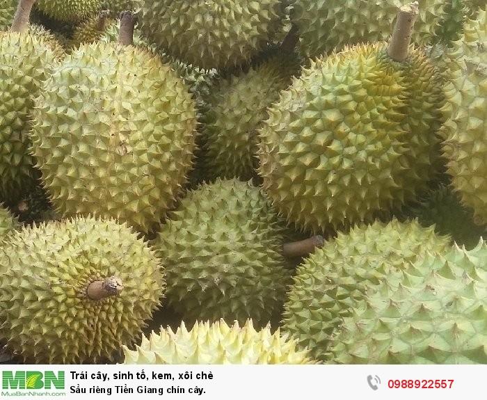 Sầu riêng Tiền Giang chín cây