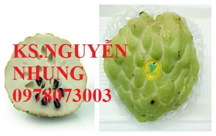 Cây na bở Đài Loan, bán giống cây na bở Đài Loan uy tín, chất lượng, cho năng suất cao7