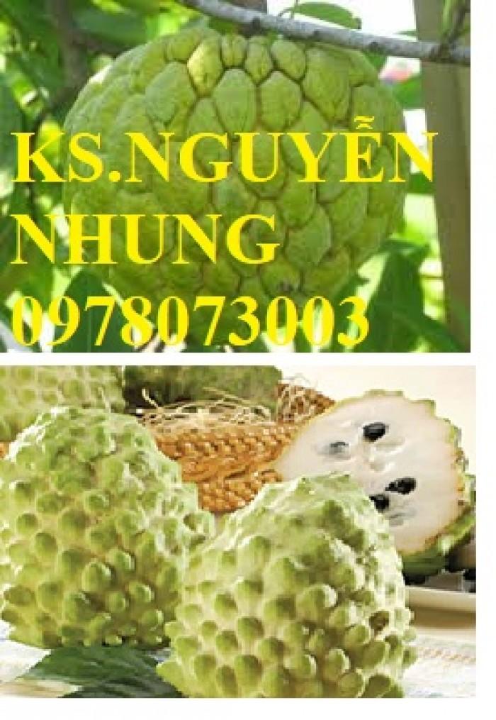 Cây na bở Đài Loan, bán giống cây na bở Đài Loan uy tín, chất lượng, cho năng suất cao2