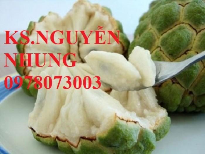 Cây na bở Đài Loan, bán giống cây na bở Đài Loan uy tín, chất lượng, cho năng suất cao5