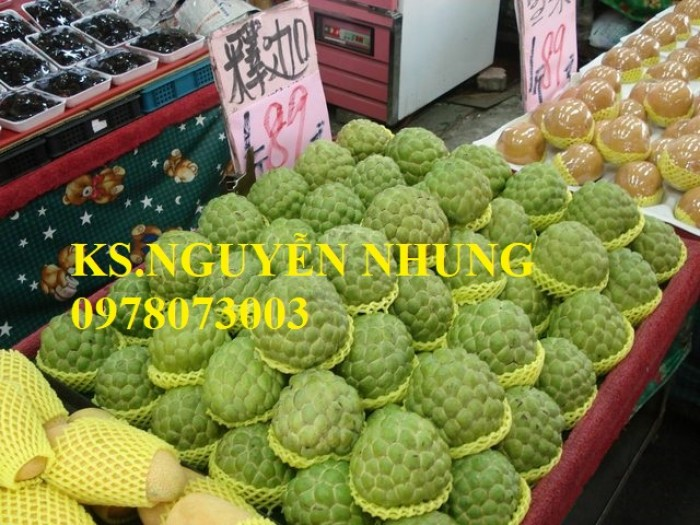 Cây na bở Đài Loan, bán giống cây na bở Đài Loan uy tín, chất lượng, cho năng suất cao4