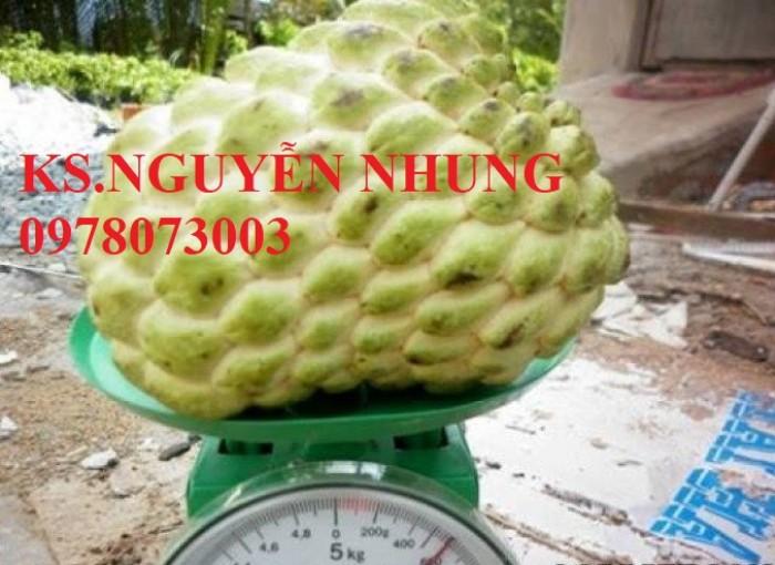 Cây na bở Đài Loan, bán giống cây na bở Đài Loan uy tín, chất lượng, cho năng suất cao3