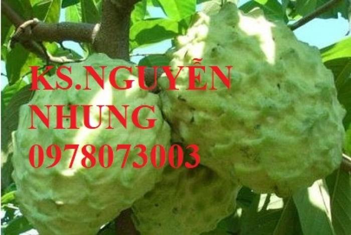 Cây na bở Đài Loan, bán giống cây na bở Đài Loan uy tín, chất lượng, cho năng suất cao6