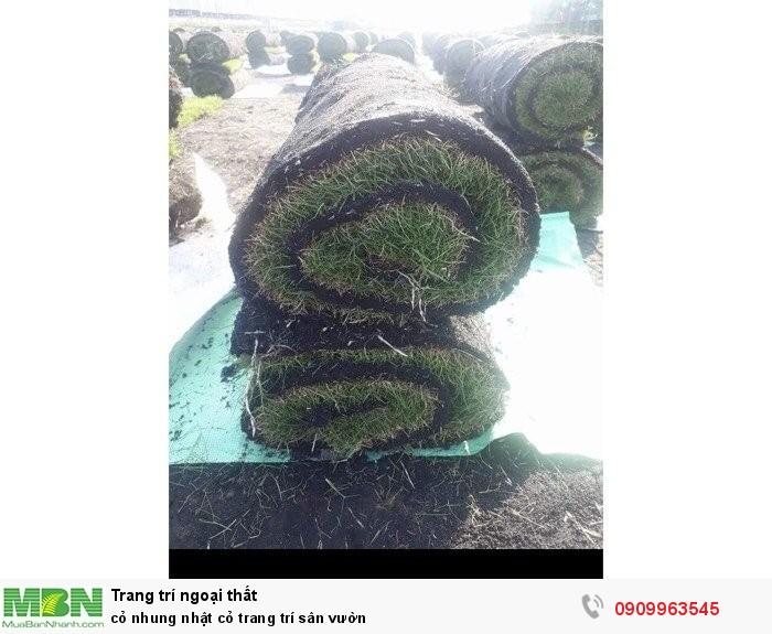 Cỏ nhung nhật cỏ trang trí sân vườn4