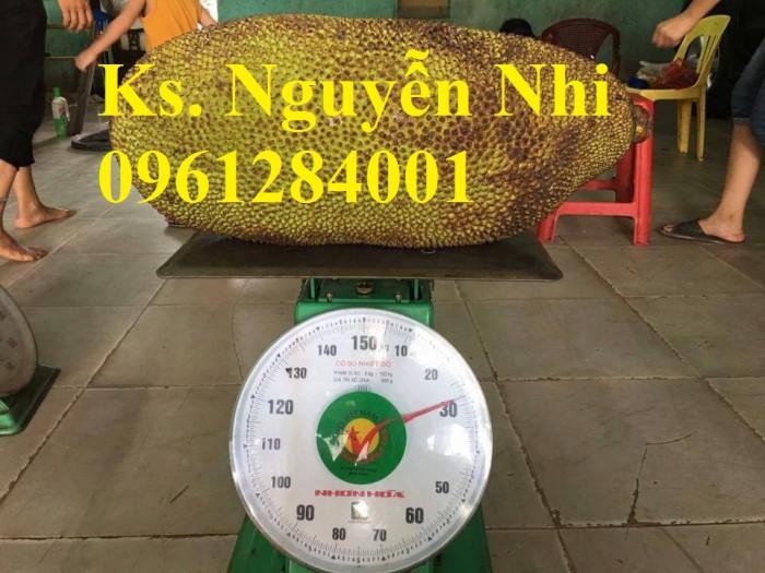 mít trái dài nặng 30 kg9
