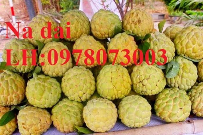 Chuyên cung cấp giống cây na các loại, na dai, na thái lan, na bở đài loan, năng suất cao8