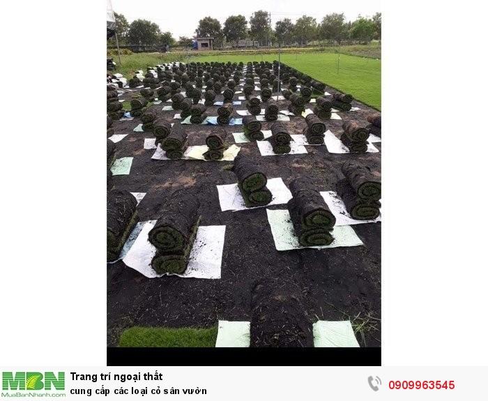 Cung cấp các loại cỏ sân vườn2