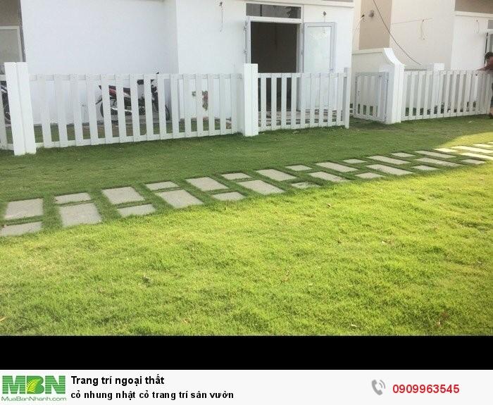 Cỏ nhung nhật cỏ trang trí sân vườn3