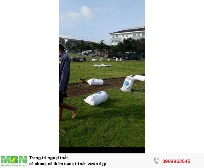 Cỏ nhung cỏ thảm trang trí sân vườn đẹp1