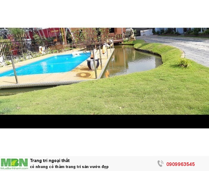 Cỏ nhung cỏ thảm trang trí sân vườn đẹp2