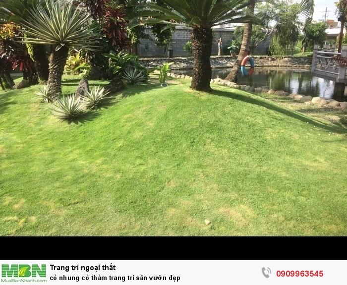 Cỏ nhung cỏ thảm trang trí sân vườn đẹp3