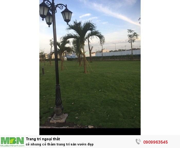 Cỏ nhung cỏ thảm trang trí sân vườn đẹp4