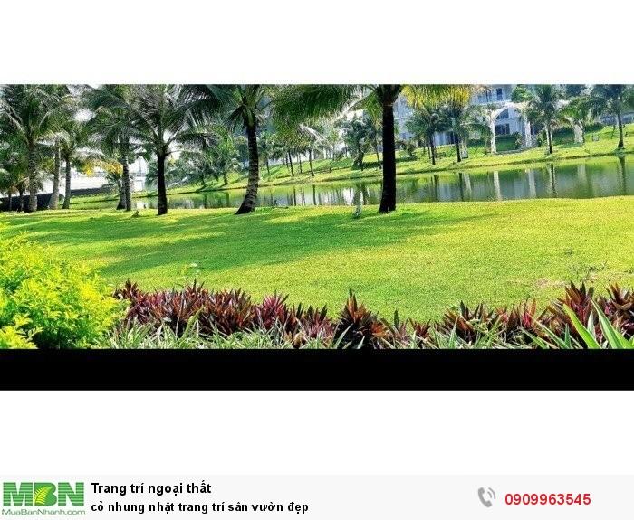 Cỏ nhung nhật trang trí sân vườn đẹp2