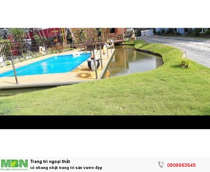 Cỏ nhung nhật trang trí sân vườn đẹp3